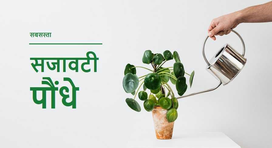 सजावटी पौधों की ऑनलाइन वेबसाइट सजावटी पौधों के नाम